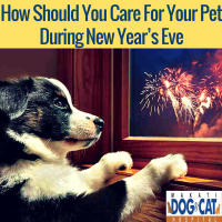 How Should You Care For Your Pet During New Year's Eve