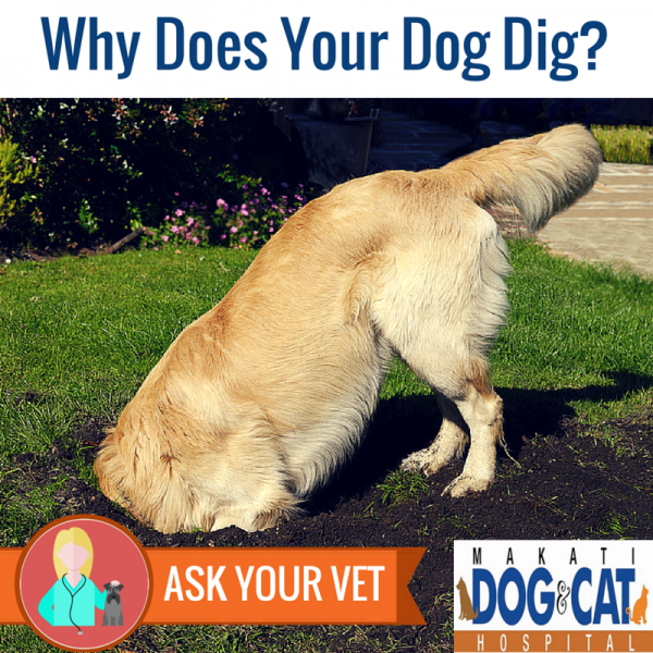 Why Does Your Dog Dig