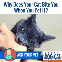 Why Does Your Cat Bite You When You Pet It?