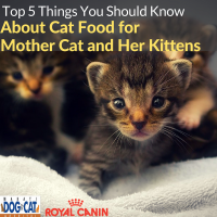 Top 5 Things You Should Know About Cat Food for Mother Cat and Her Kittens