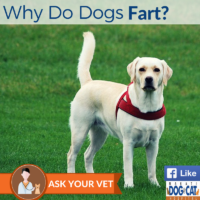 Why Do Dogs Fart?