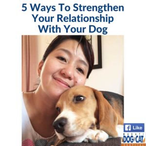 5 Ways To Strengthen Your Relationship With Your Dog