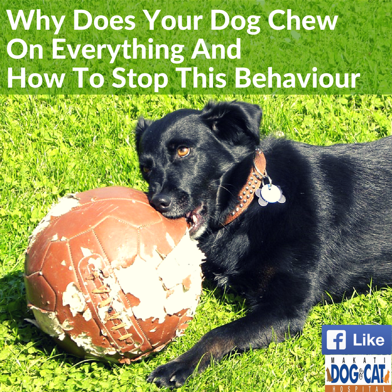 how to get a puppy to stop chewing everything