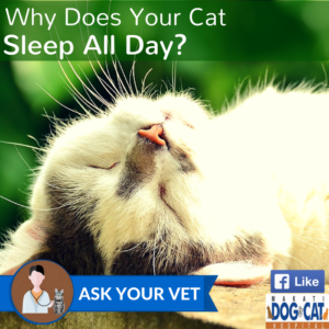 Why Does Your Cat Sleep All Day?