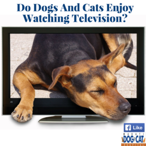 Do Dogs And Cats Enjoy Watching Television?