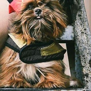 veterinary clinic in makati naughty and nice pet photo contest 15