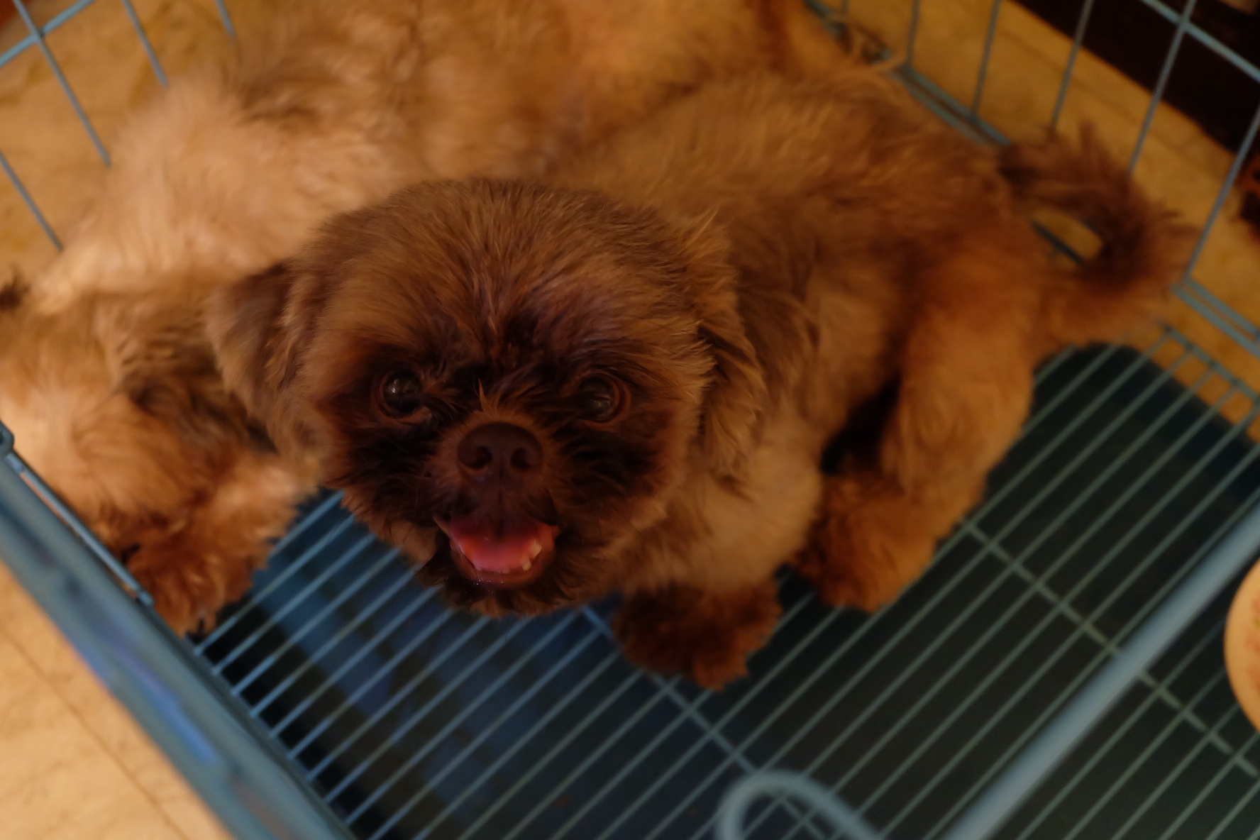 veterinary clinic in makati naughty and nice pet photo contest 16