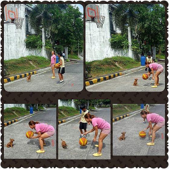 pet clinic mandaluyong