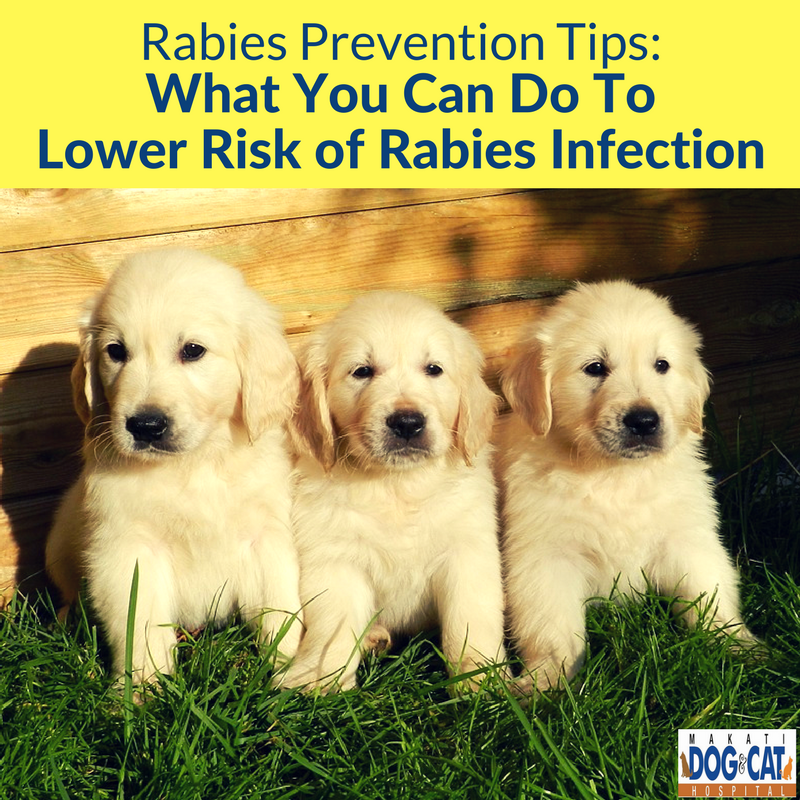 rabies prevention tips