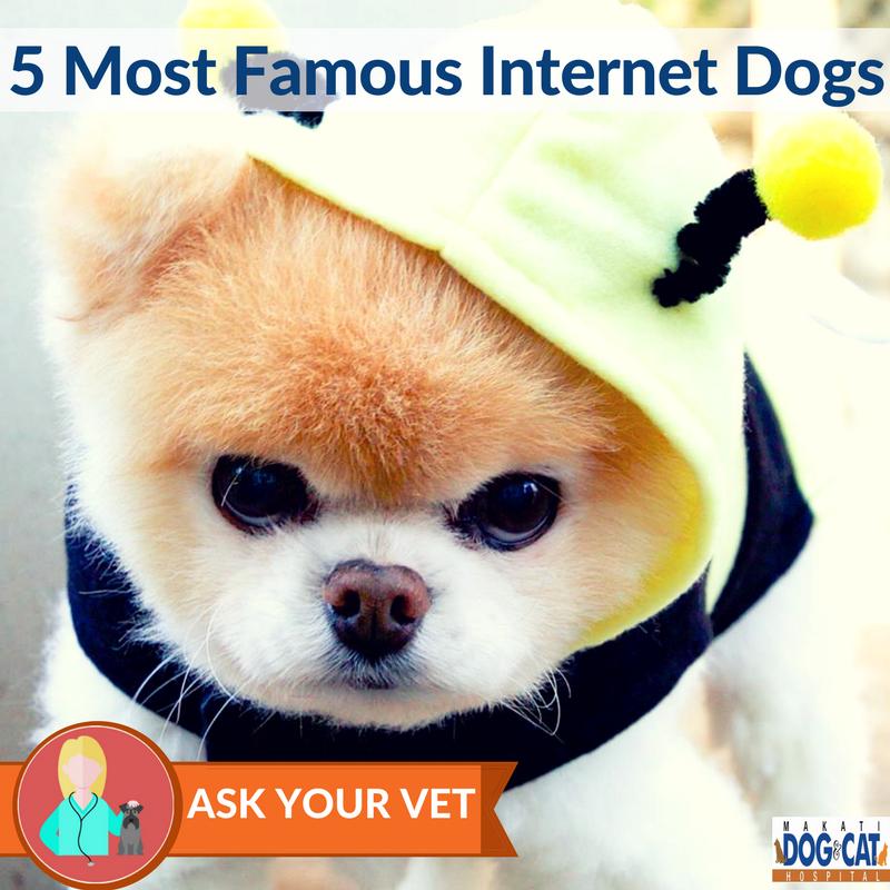famous internet dogs