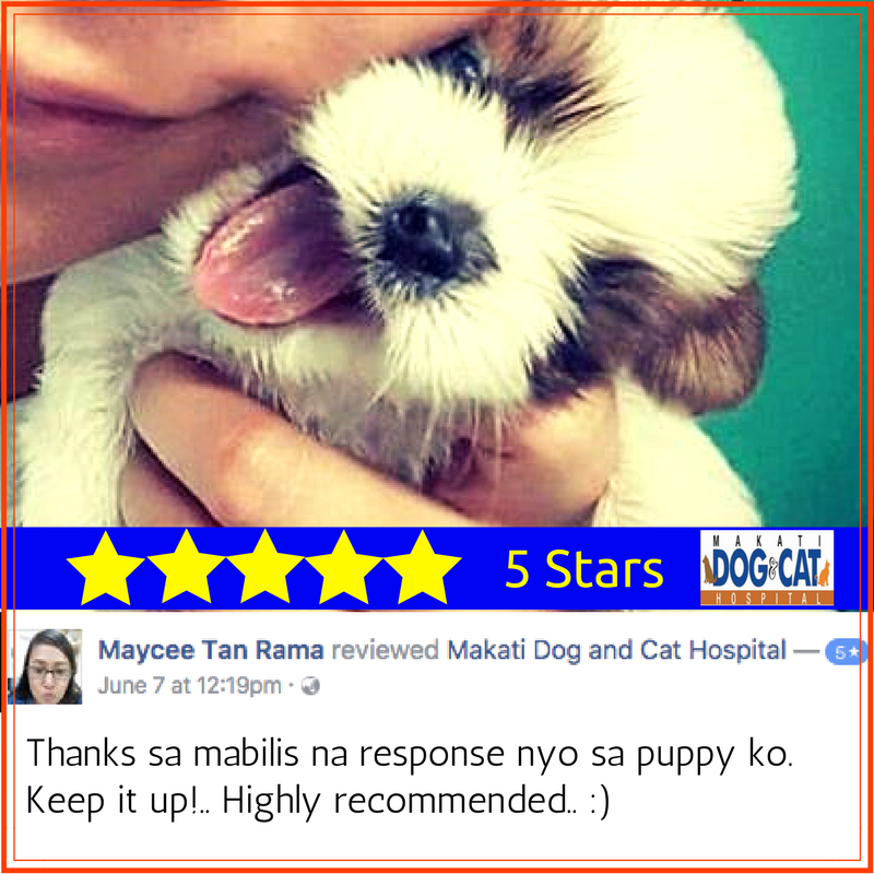 makati dog and cat review