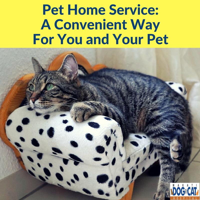 pet home service