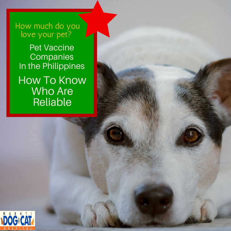 Pet Vaccination Schedule Archives